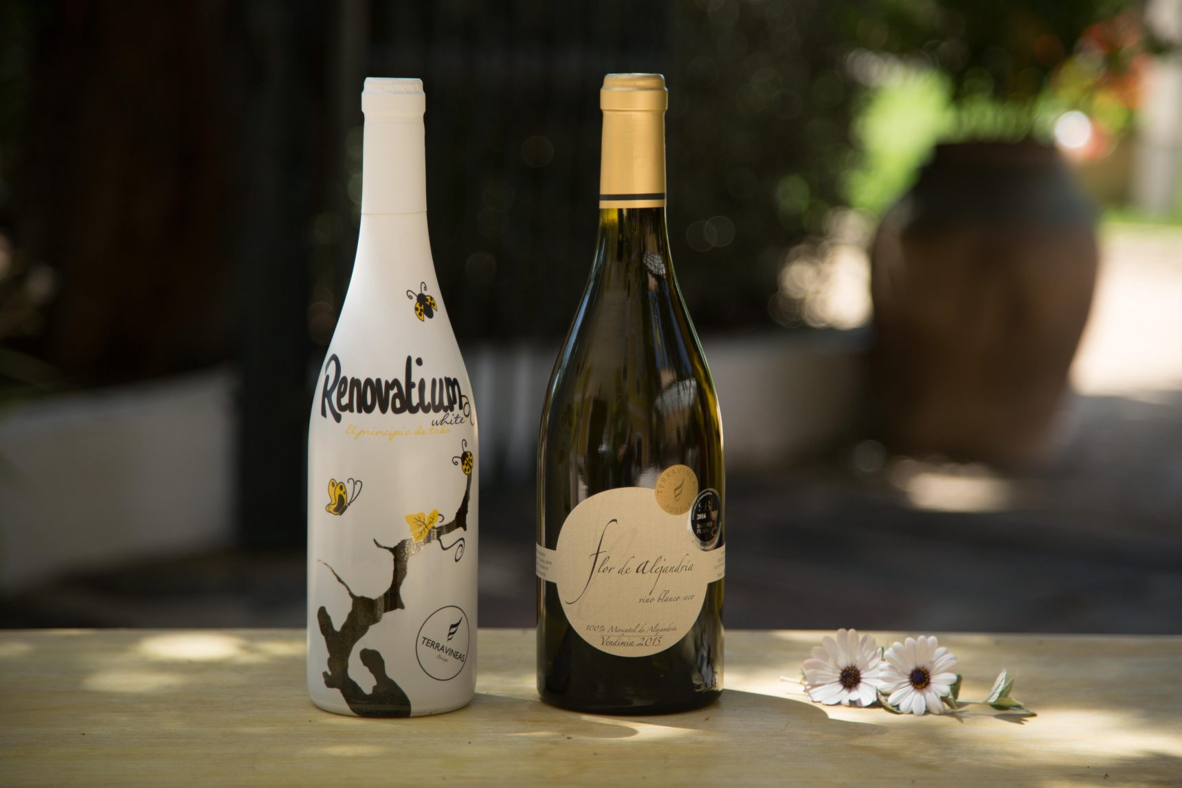 vinos bodega